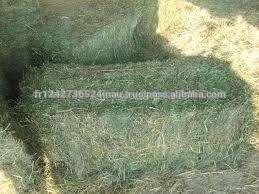 用于动物饲料的供应来自法国优质苜蓿干草