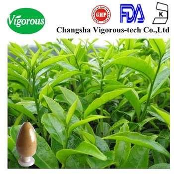 oolong tea leaf extract/ oolong tea leaves extract/oolong tea 90% polyphenols