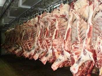 质量便宜的冷冻清真牛肉,山羊,Frozen Sheep Meat出售