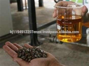 优质麻疯树油和种子