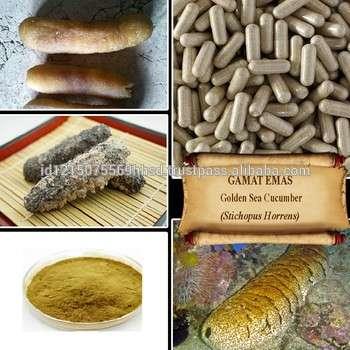 金刺参/ gamat EMAS /糙刺参/抗老化/鲜粉、浸膏、胶囊、液体、油
