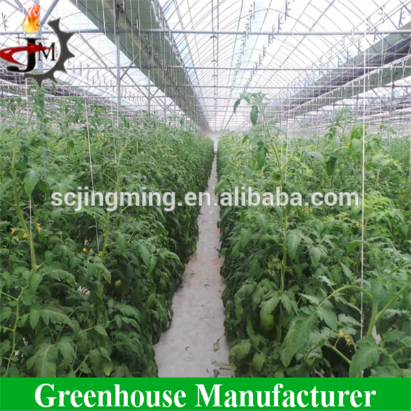 Tomato greenhouse with hanging plant hook