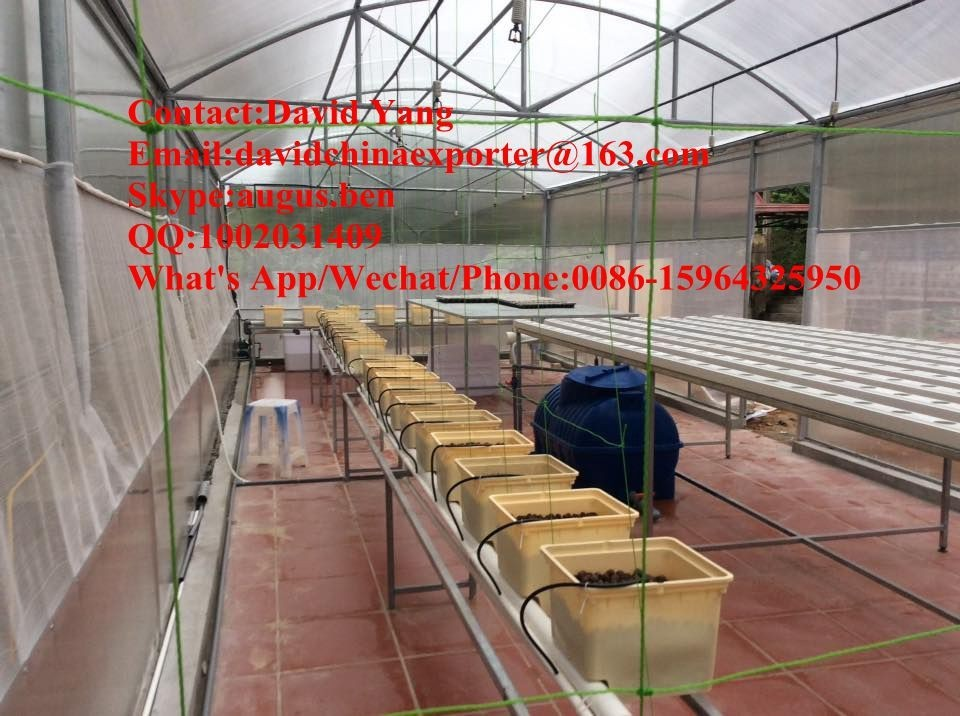 mushroom/cucumber/tomato growing single layer PE greenhouse