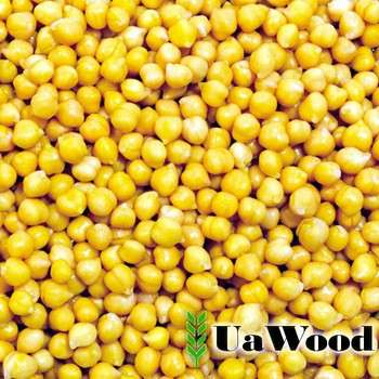 乌克兰黄豌豆