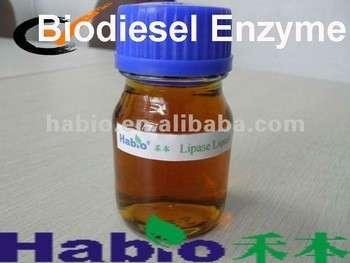 专业的脂肪酶,生物柴油