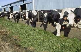 用于动物饲料的供应来自德国优质苜蓿干草