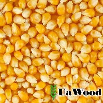 人类消费的黄玉米