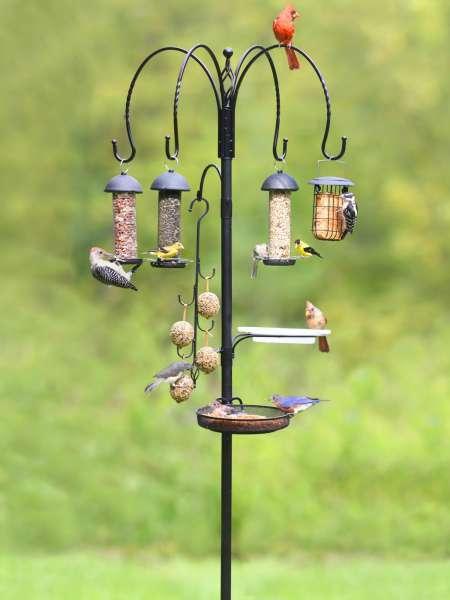 鸟类饲养站