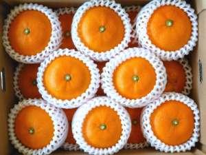 Grapefruit supply, kiwi fruit wholesale, citrus supplier, fresh fruit supply