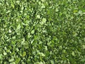 100% Pure Natural Moringa Leaves Exporters
