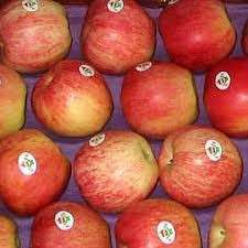 Royal Gala apples for sale