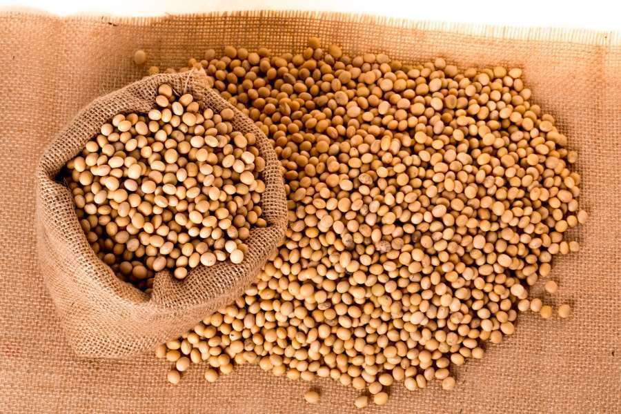 Soybeans Manufacturers | Soybeans Suppliers - Eworldtrade com