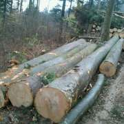 beech logs / swiss quality / FSC