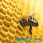 TAIMA Super propolis powder propolis extract with best quality propolis flavoid