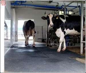 Stable Rubber Mats/sheet/roll For Cattle,horse,pig,sheep(Rubber Mat-05)