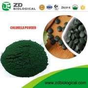 Chlorella Powder (Tablet)