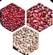 Our company engaged in Coffee production,  processing and exporting of washed coffee, kidney beans and turmeric