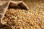 Top Quality Barley for sale