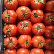 Fresh Tomato Export from cameroon