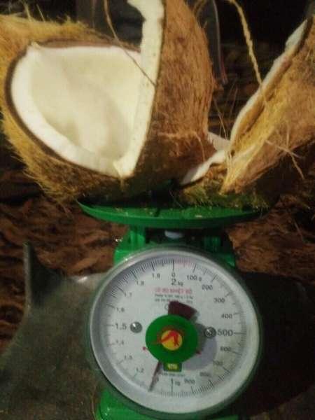 Semi husked Dried Coconut
