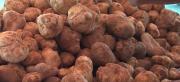 Fresh high quality Moroccan white truffle