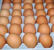 High Quality Fresh Chicken Eggs For Sale