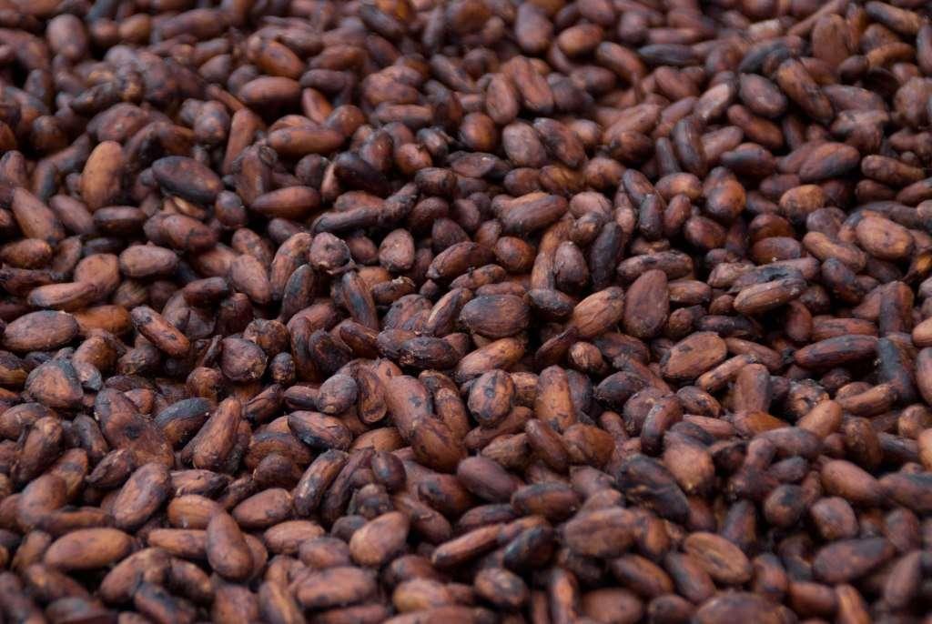Dried Beans Manufacturers   Dried Beans Suppliers – eWorldTrade