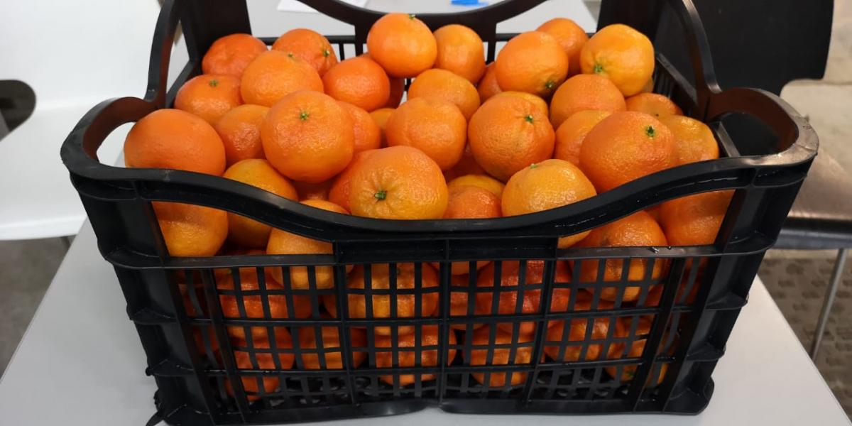 Tangerine Clementine