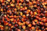 Palm Oil and Derivatives( Kernels, Kernel Oil)