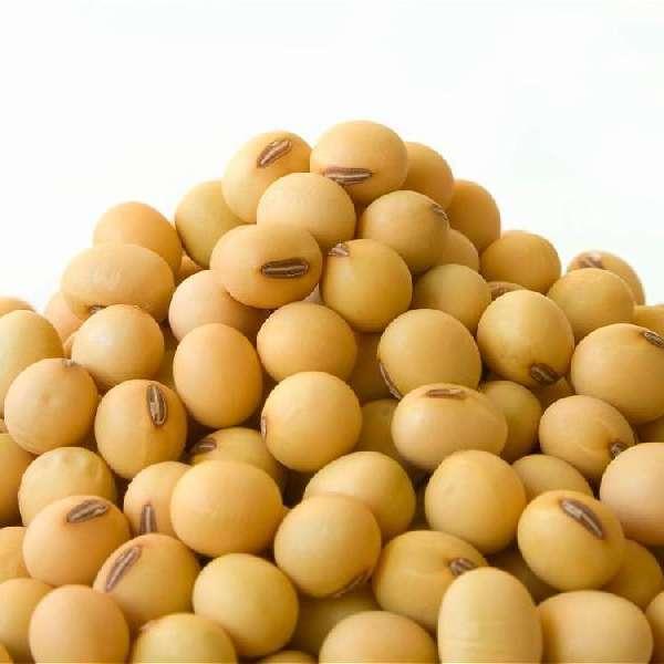 动物饲料和人类消费用优质批发大豆