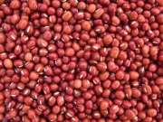 Red/White sorghum