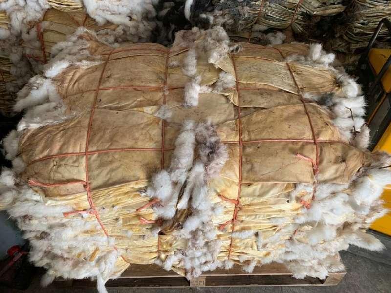 Dried rabbit skins