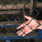 Cheap pvc coated Chain link fence galvanized chain link fence