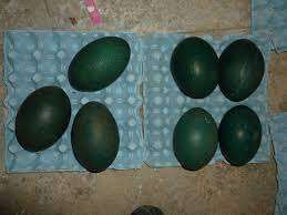 Raven eggs,Pheasant Eggs,Emu Eggs for sale