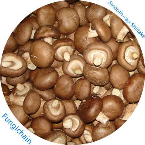 Fresh 4-6 cm shiitake mushroom for Asian Market