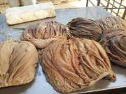 100% Fresh Salted Dried Cow/Buffalo Frozen Omasum