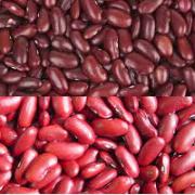 Dark/Light Red Beans
